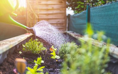 A No-Excuses Guide for Starting a Vegetable Garden