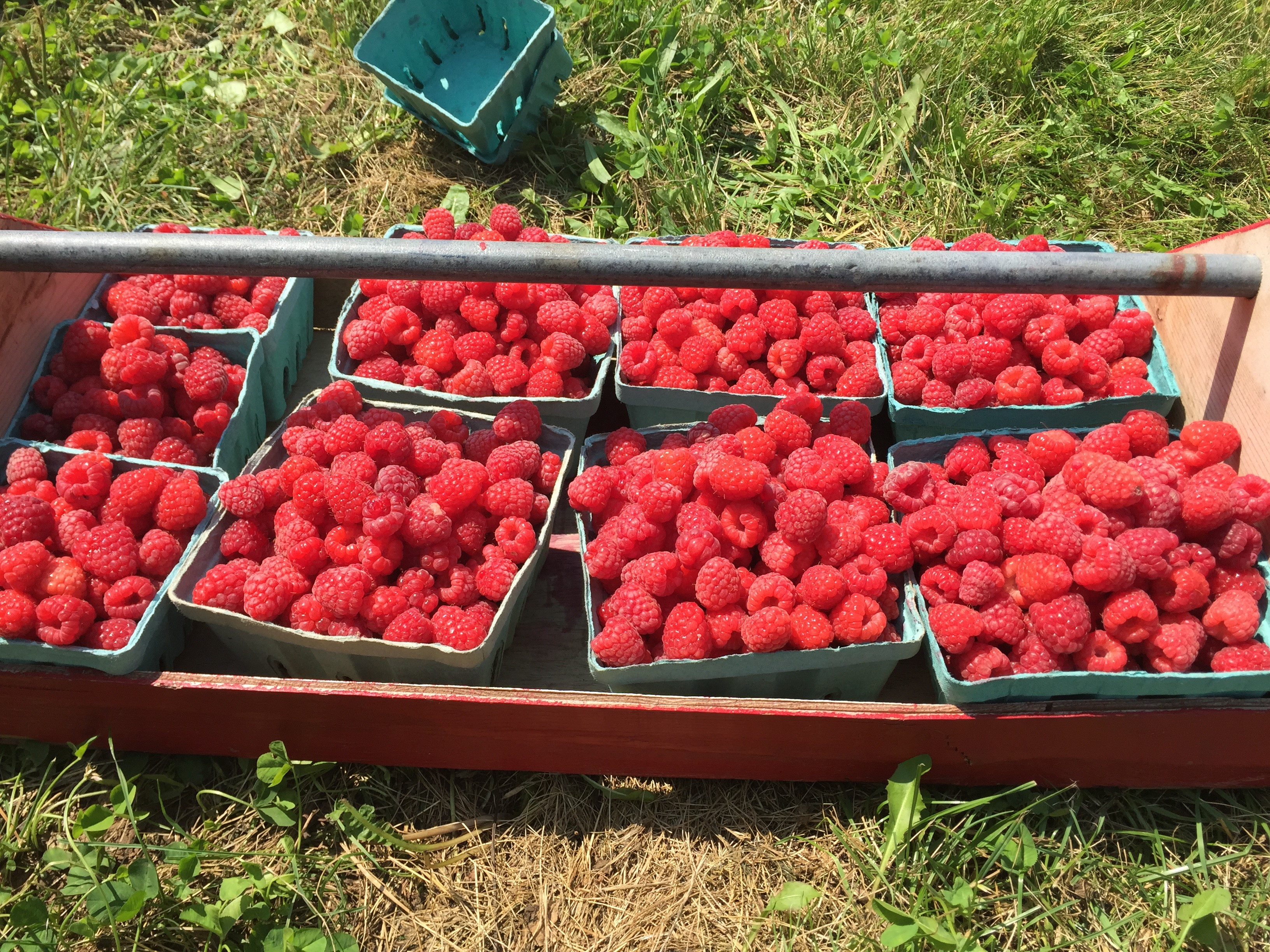 Ten Tips for Visiting a U-Pick Fruit Farm with the Kids